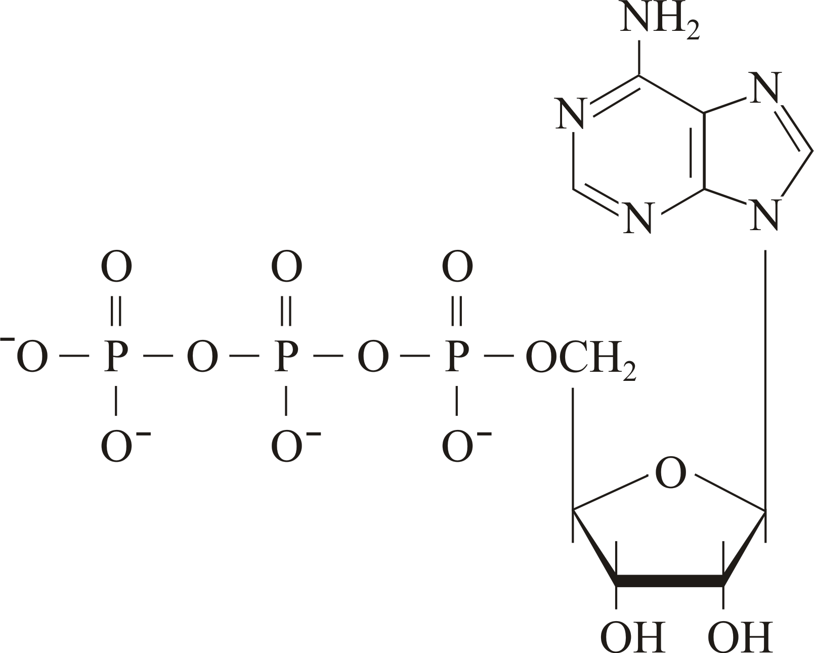an introduction to the phosphate compound adenosine triphosphate