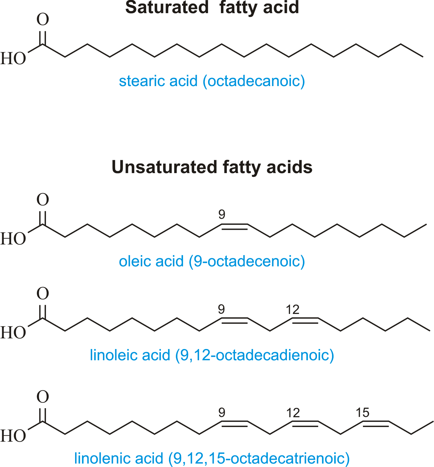 Fatty Acid   Chemistry Dictionary  U0026 Glossary