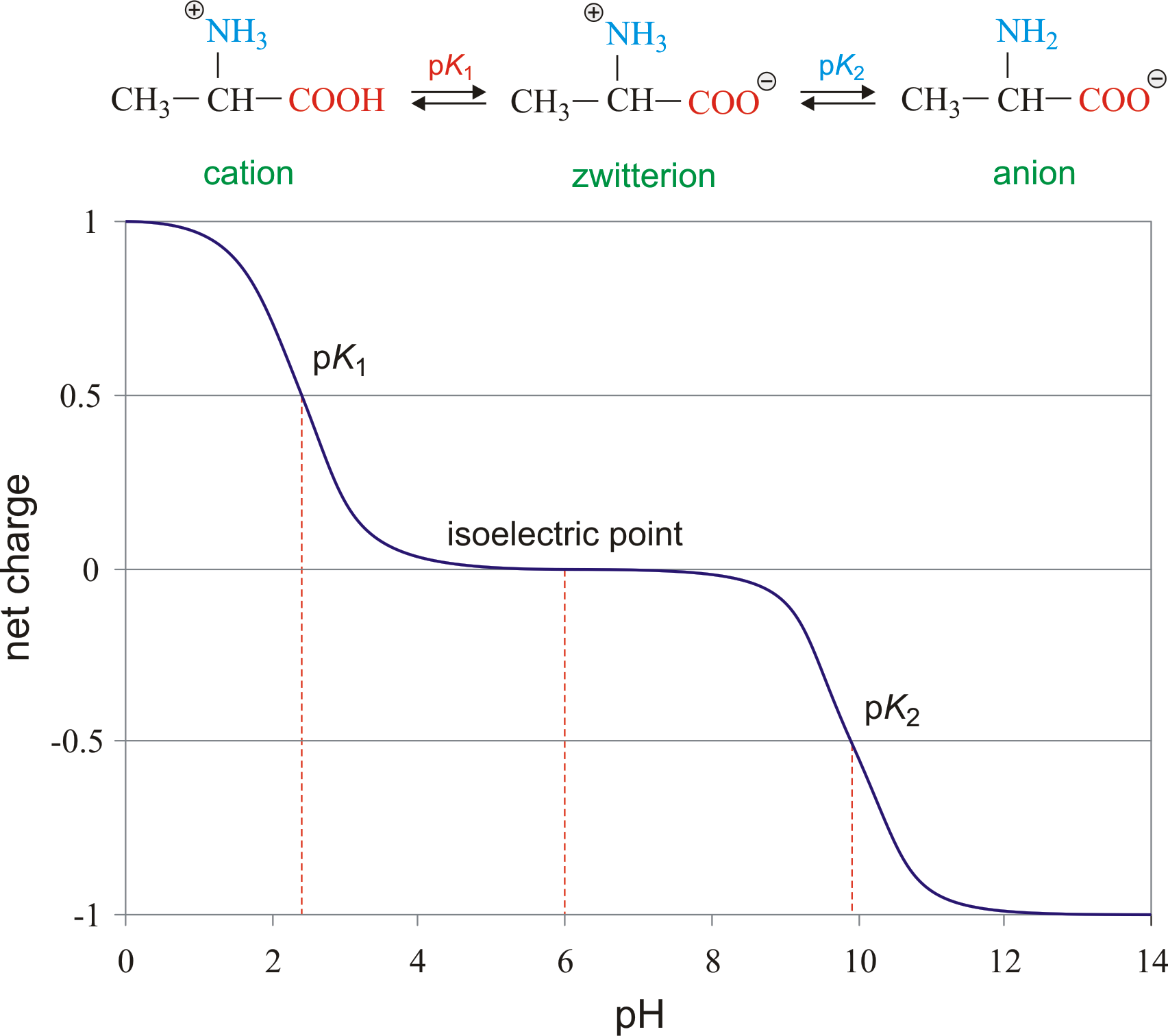 Isoelectric point